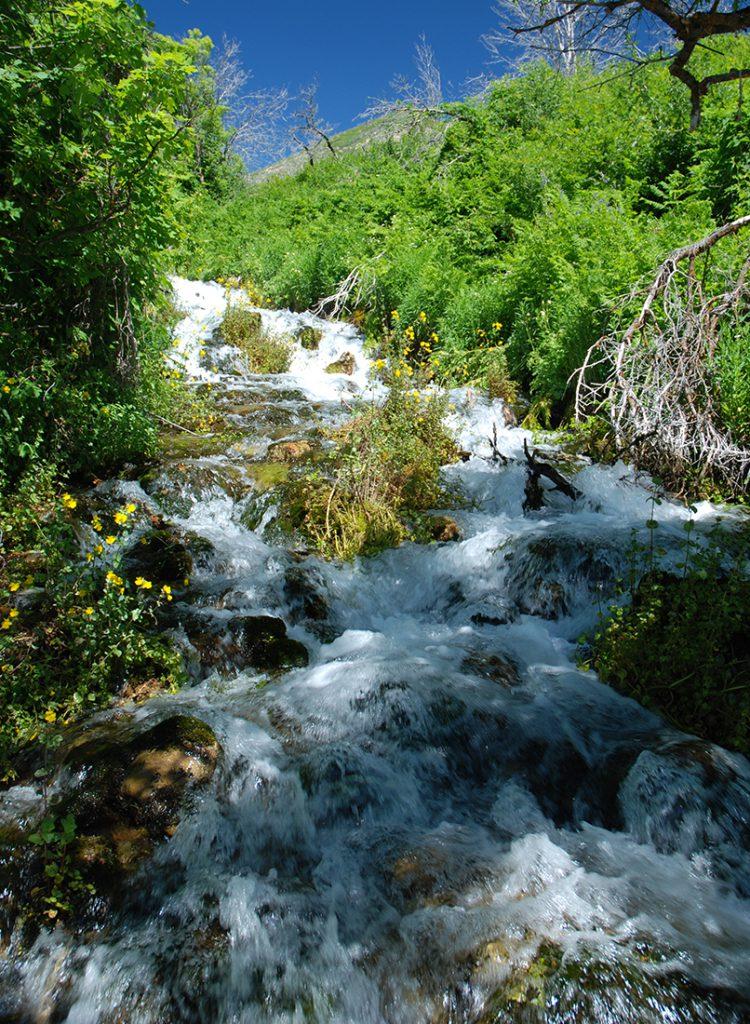 CEMS Environmental Services